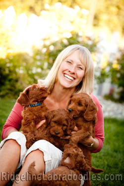 Breeder of Australian Labradoodles serving Washington, Seattle, Medina, Bellevue, New York and beyond.